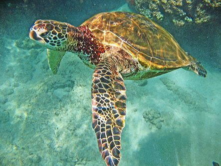 Black-rock-turtles-maui-hawaii-cover(1)
